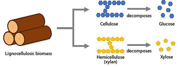 图1:木质纤维素生物量的结构组成(不与全球粮食供应竞争)